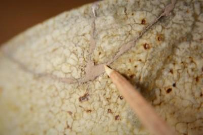 鯛牙で蒔絵紛をぐりぐり擦って磨いていく。