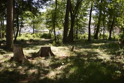 地元の雑木林