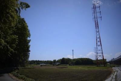 木と田んぼの風景