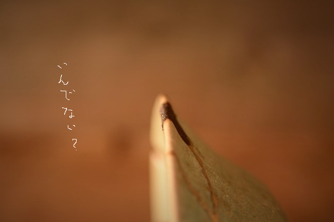 kokusogai_a036
