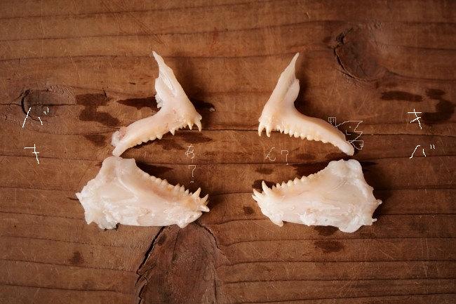 金継ぎの蒔絵で使う磨き棒は鯛の牙を使う。